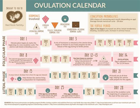 Fertilization Calendar Understanding Your Ovulation Cycle Infographic Rock