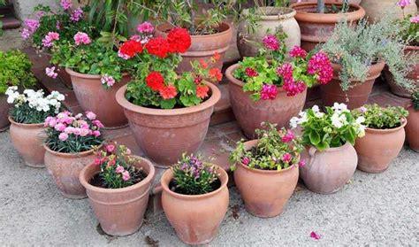 como decorar macetas de jardin 7 consejos de jardineria en macetas para principiantes