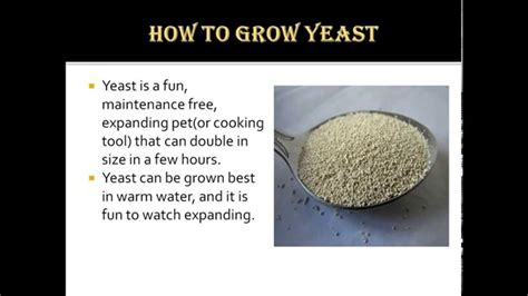 how to raise a how to grow yeast youtube
