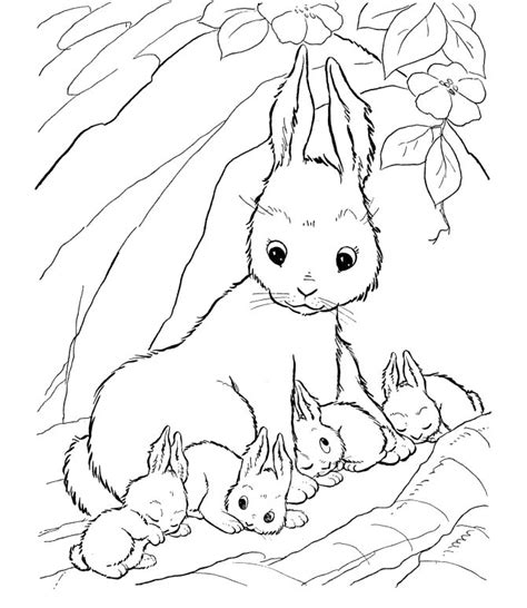 rabbit hutch coloring page free rabbit in hutch coloring pages