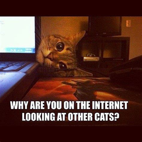 Funny Cats Memes - 25 funny animal memes to make you laugh till you drop