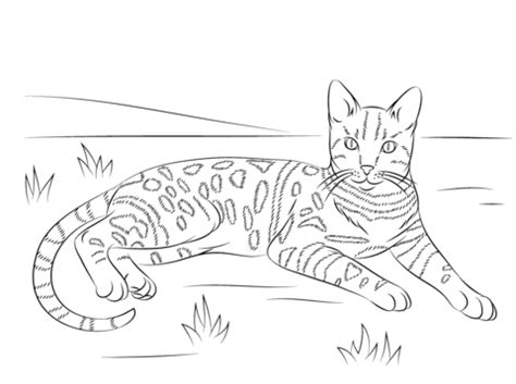 Tabby Cat Coloring Pages tabby cat coloring pages realistic coloring pages