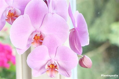 facts about orchids 100 facts about orchids 6 incredible flowers that
