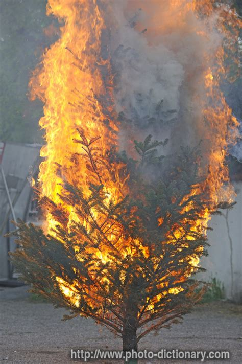 beds are burning meaning burning tree photo picture definition at photo dictionary burning tree word and