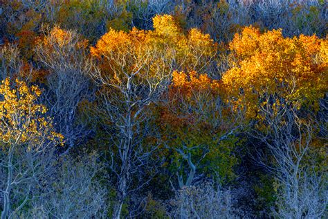 glorious color glorious color emerges in mono county california fall color
