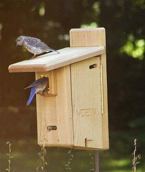 window bird house plans 1000 ideas about bluebird house plans on pinterest bird