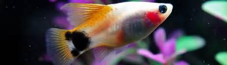 10 best saltwater aquarium fish for beginners beginner aquarium fish