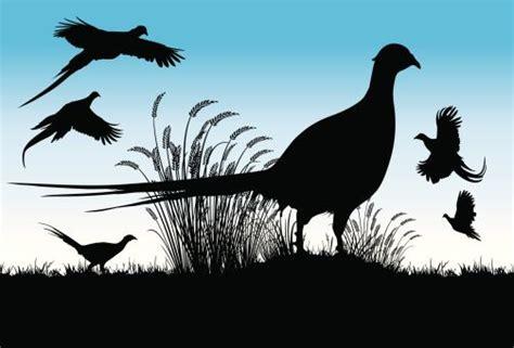 silhouette   pheasant bird clip art vector images