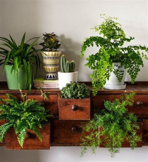 Indoor Plants For Interiors A Style House Plants By Bethany