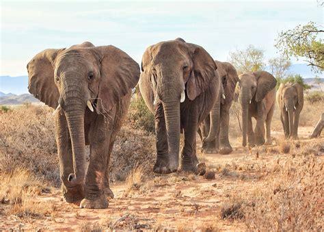 imagenes de animales del desierto desierto animales www imgkid com the image kid has it