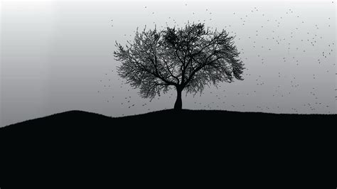 tree background hd photos 40 hd tree wallpapers backgrounds for free