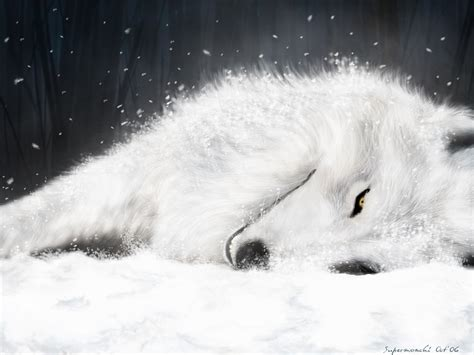 white wolf white wolf wolves wallpaper 3582692 fanpop