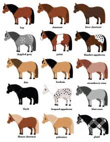 color of horses pony color chart graphic design infographics