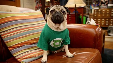 doug the pug meet and greet doug the pug spoofs big theory on set rtm rightthisminute