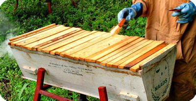 buy top bar hive how to choose the most appropriate beehive type in uganda