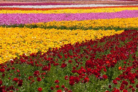 field of flowers pictures free dynamic views most beautiful wallpapers free