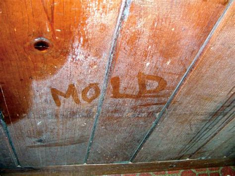 types of basement mold repairing sagging floor joists girders in your crawl
