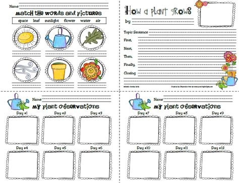 printable plant observation journal sailing through 1st grade february 2012