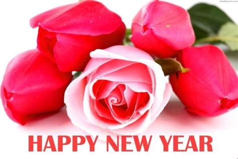 flower hd images with happy new year flowers on happy new year 2016 hd wallpaper 05769 hd wallpapers pic pictures season