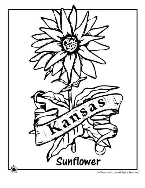 State Flower Coloring Pages Kansas State Flower Coloring Kc Colour Pages