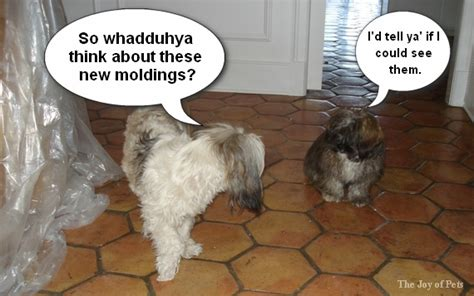 talking puppies dogs talking about moldings the of moldings