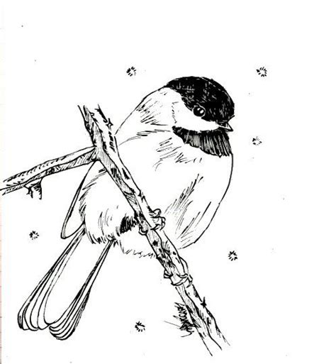 zebra finch coloring page 1000 images about year 1 on pinterest antonio canova