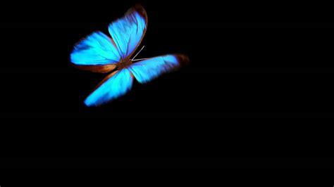 blue on black blue butterfly on black