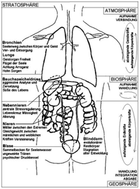 menschlicher körper innere organe k 246 rper anatomie organe