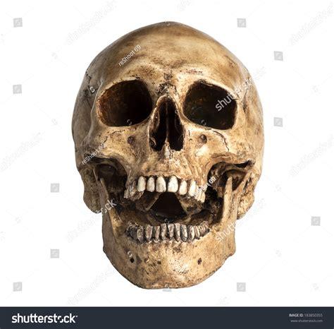 imagenes de calaveras kaibil skull model open mouth pose isolated stock photo 183850355