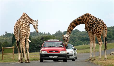 drive zoo near me the top ten safari parks in the u s