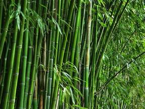 bamboo teri house home