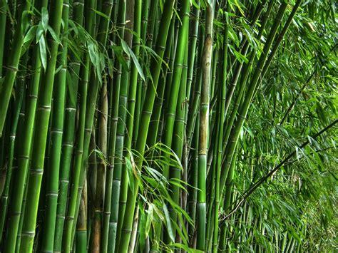 bamboo teri house home