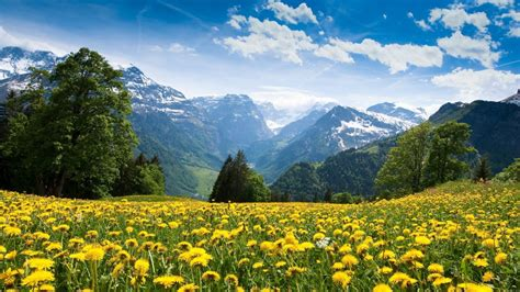 mountains landscape nature mountain spring meadow flowers