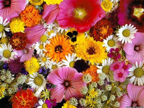 beautiful flower flowers for flower lovers beautiful flowers wallpapers
