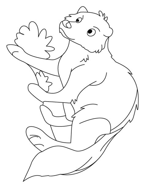 Mongoose making his burrow coloring pages | Download Free