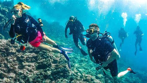 scuba dive scuba diving with sharks