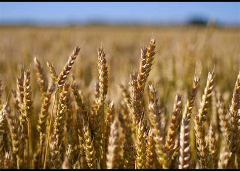 whole grains mayo clinic whole grains add more than carbs and calories to a diet