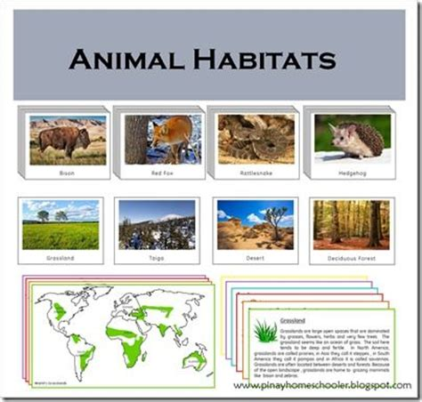 printable animal habitat cards 1000 images about zoology unit on pinterest life cycles