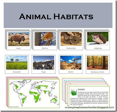 printable animal habitats 1000 images about zoology unit on pinterest life cycles