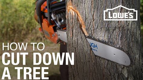 8 Ways To Cut Back On Caffeine by How To Cut A Tree