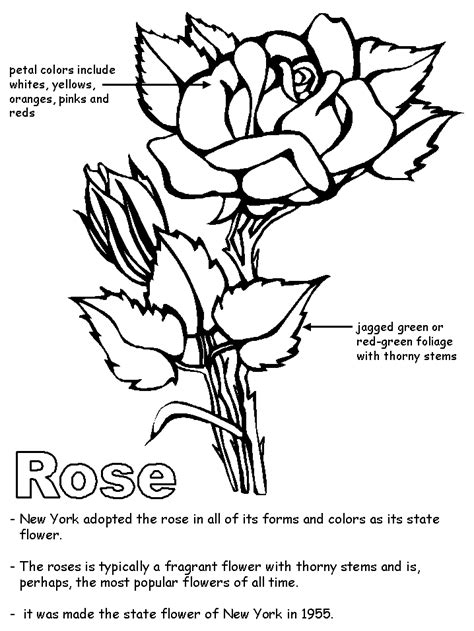 free coloring pages united states symbols rose with labels