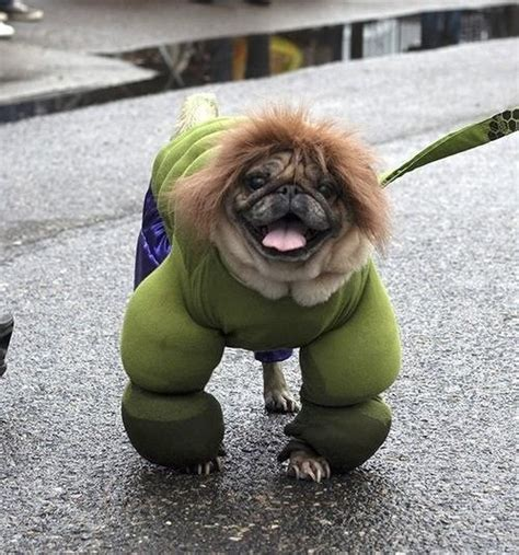 pugs that don t grow top 10 scary and angry dogs