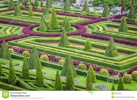 garten zierpflanze ornamental plants tree tropical landscape in nature garden