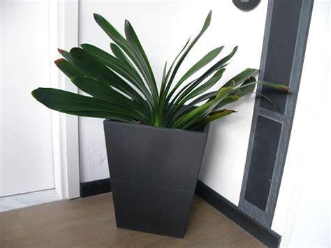 vasi per arredamento interno vasi arredamento interni ispirazione di design interni