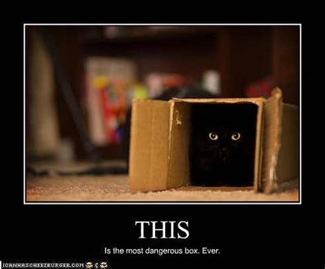 Black Box Meme - 22 funny cat motivational posters find the funniest cat