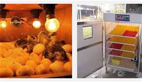 Jenis Mesin Tetas Telur Ayam mesin tetas telur ayam bangkok situs ayam bangkok 2017