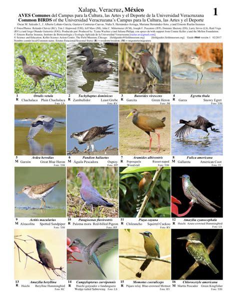 guia de la universidad veracruzana 2017 veracruz aves comunes del cus de la universidad