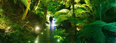 australian national botanic garden luminous botanicus iii enlighten