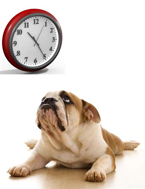 can dogs tell when your can your tell the time joyful dogs