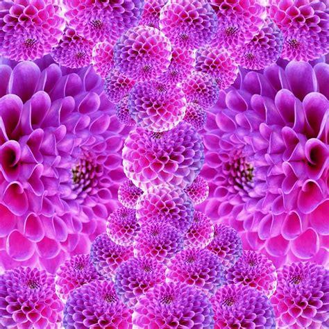 Free photo: Dahlia, Flowers, Fantasy, Beautiful   Free Image on Pixabay   170835